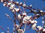 è arrivata la primavera!