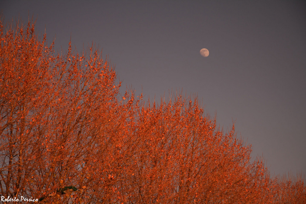 E la luna bussò....