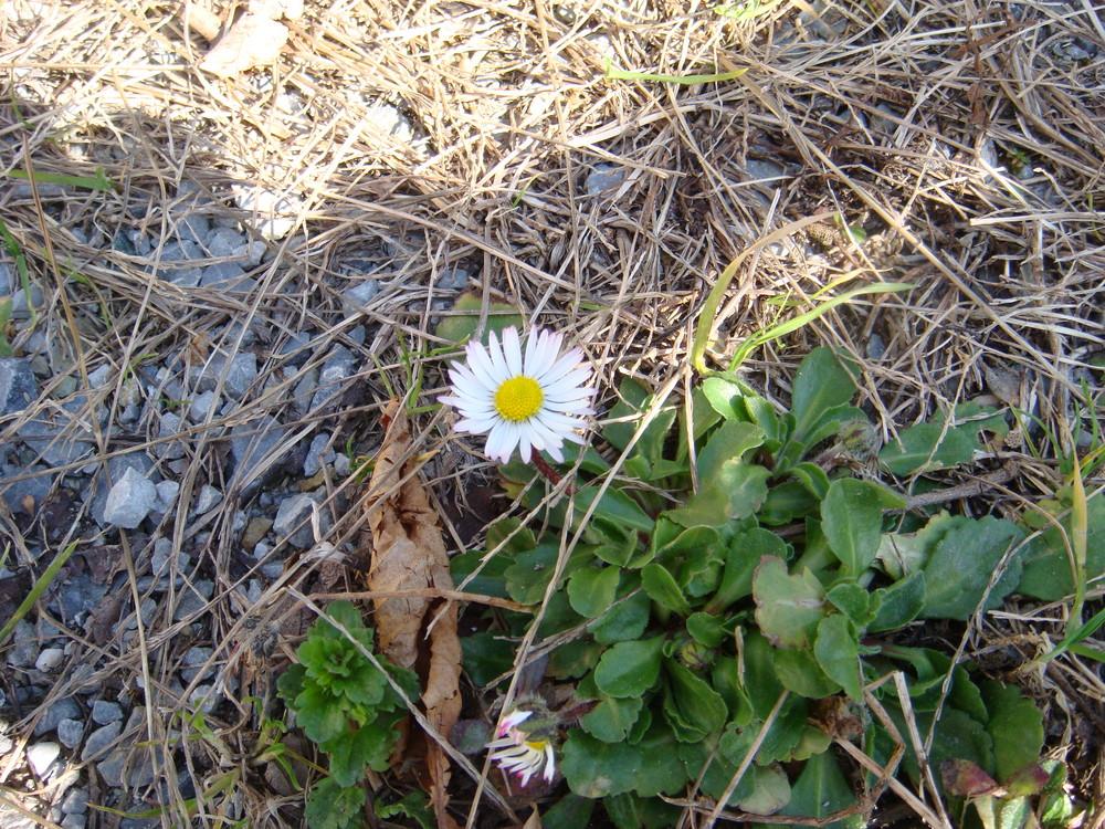 è la primavera !!!