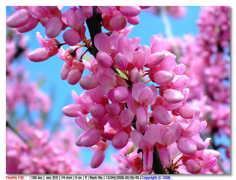 e' Primavera....