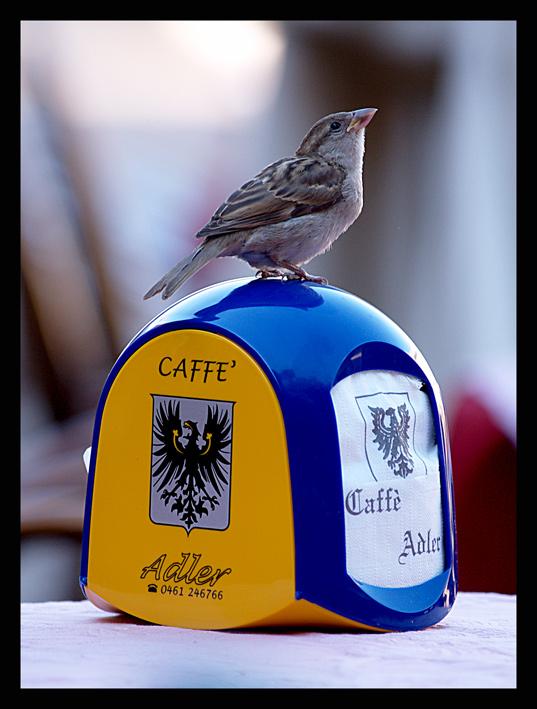 è pronto il mio caffè???