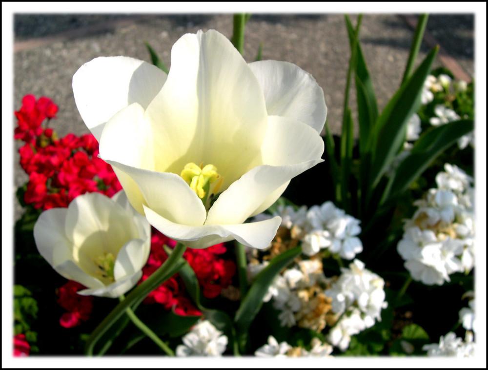 ...è sbocciata la primavera!