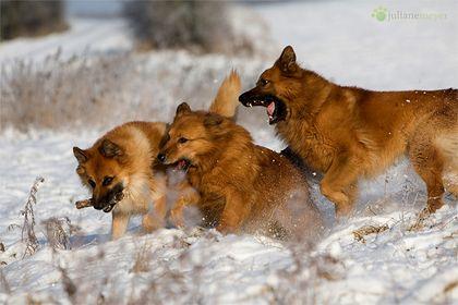 Tiere in Schnee und Eis