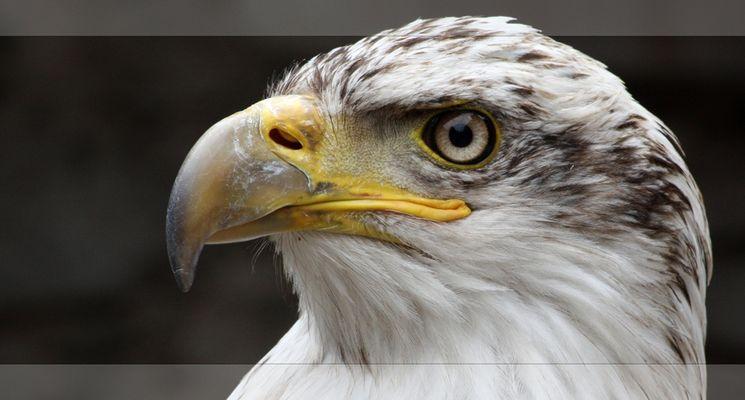 Eagle-Eye (reloaded)