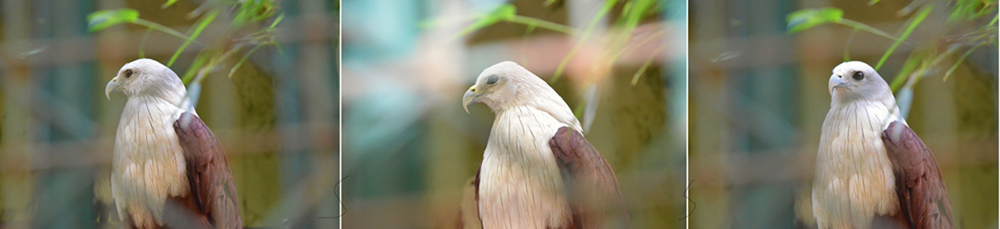 eagle v