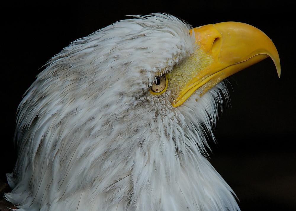 Eagle's Return