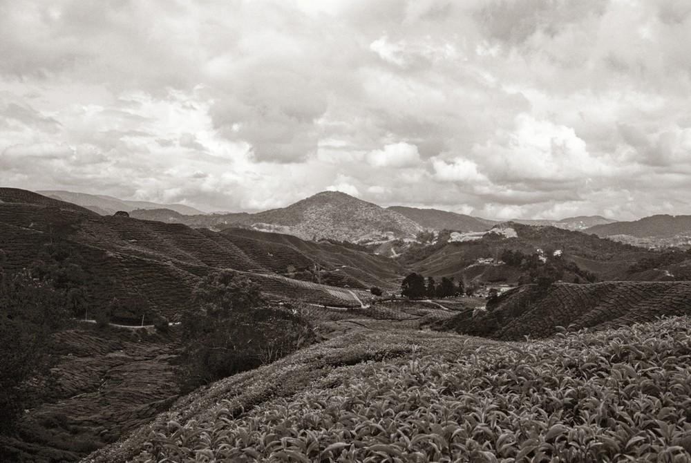 Earl Grey in Black-White 2