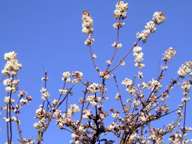 early spring blossom