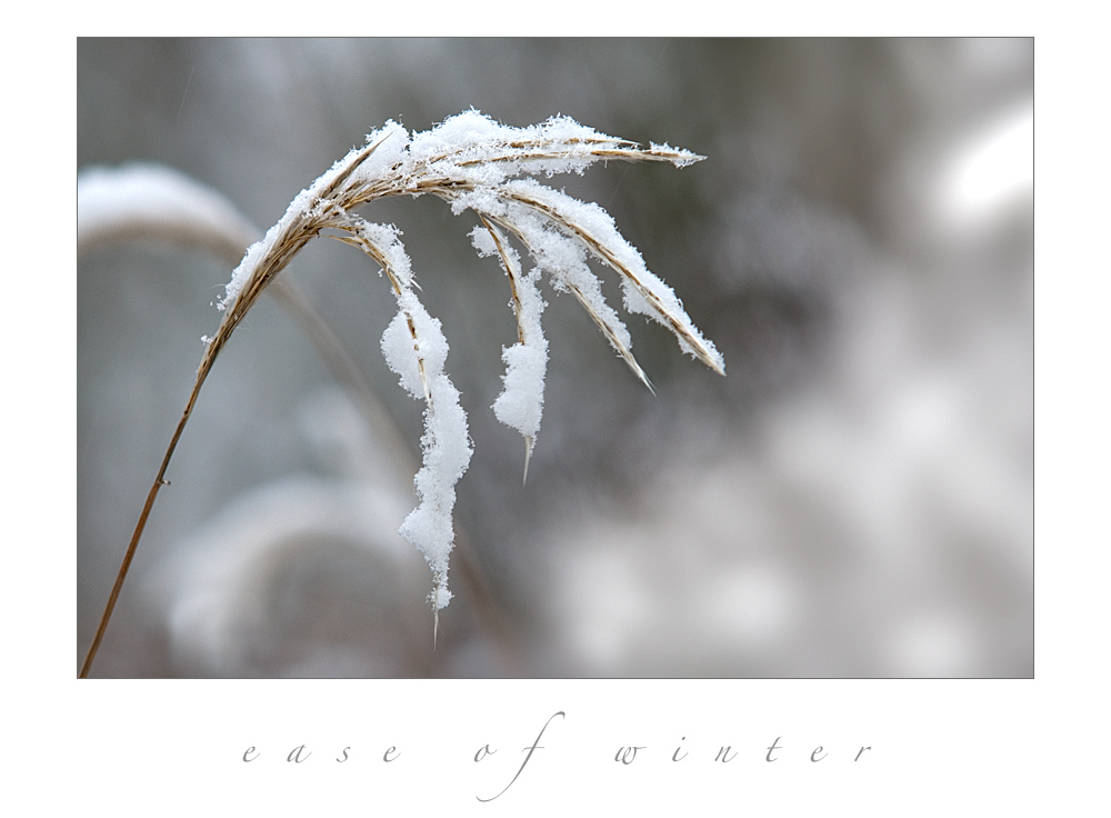 Ease of Winter