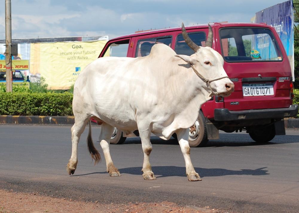 Easy going in Goa...