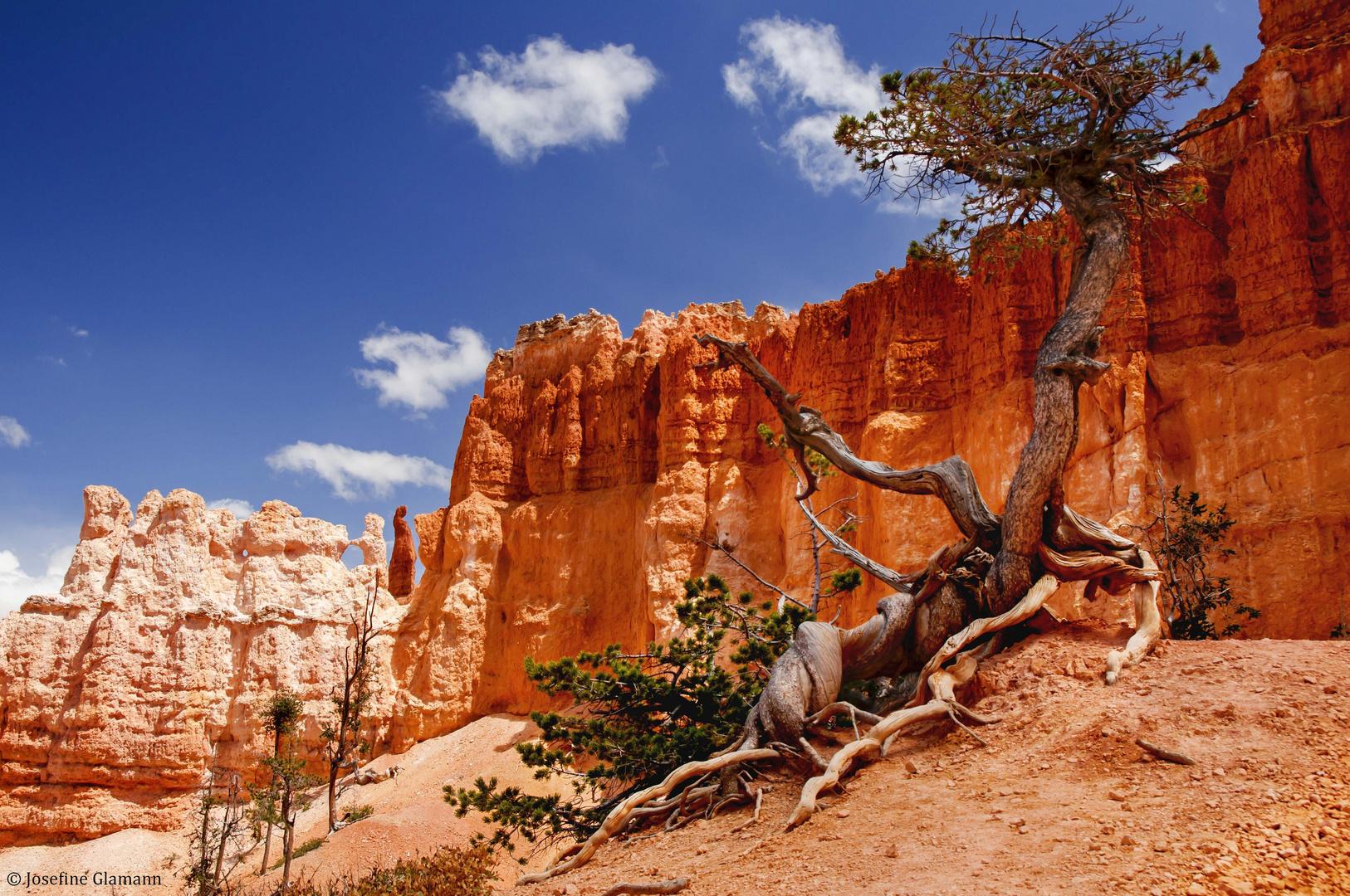 Easygoing Tree