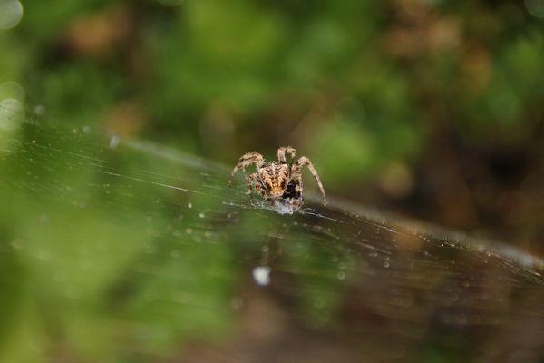 Eat me Spider