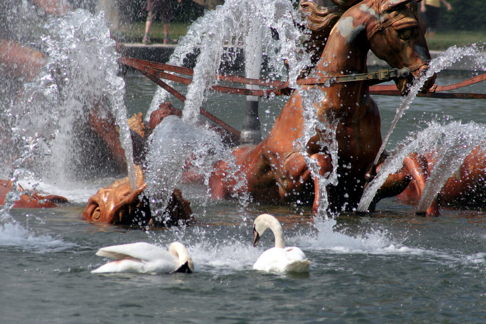 Ebats de cygne dans la fontaine