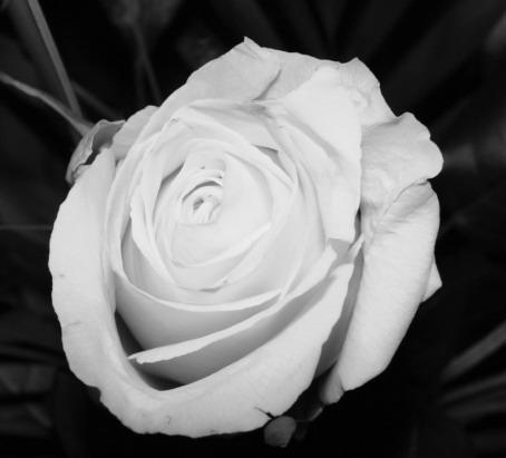 ebbe e Rose