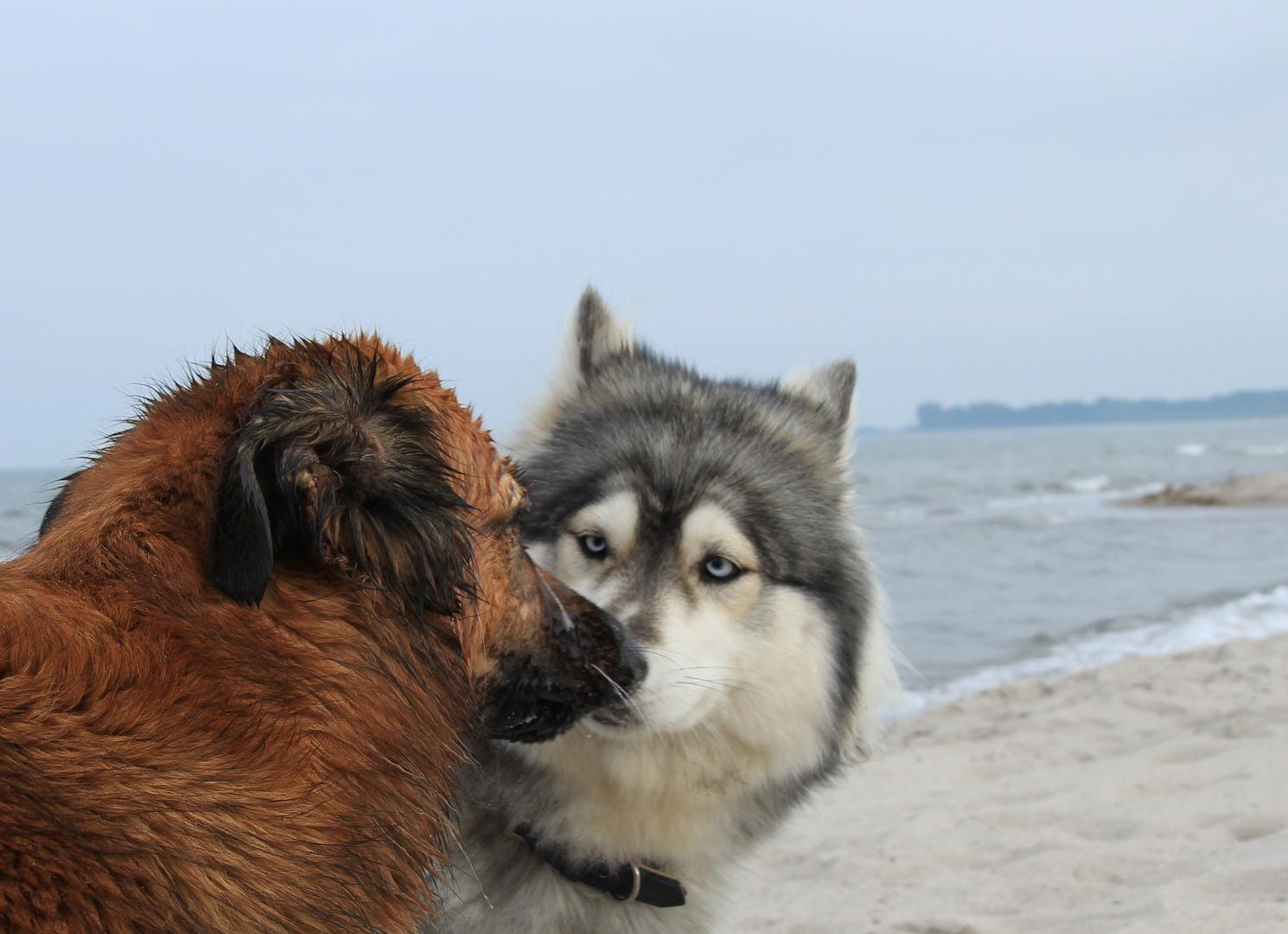 Echte Freundschaft