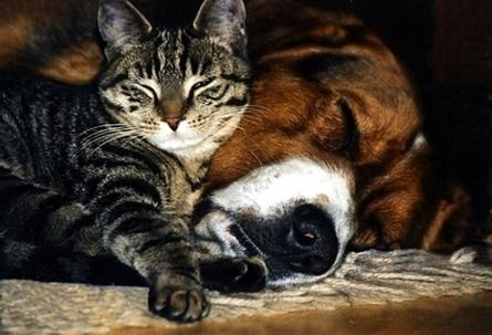 Echte Tierliebe