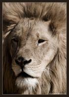 Echter König II