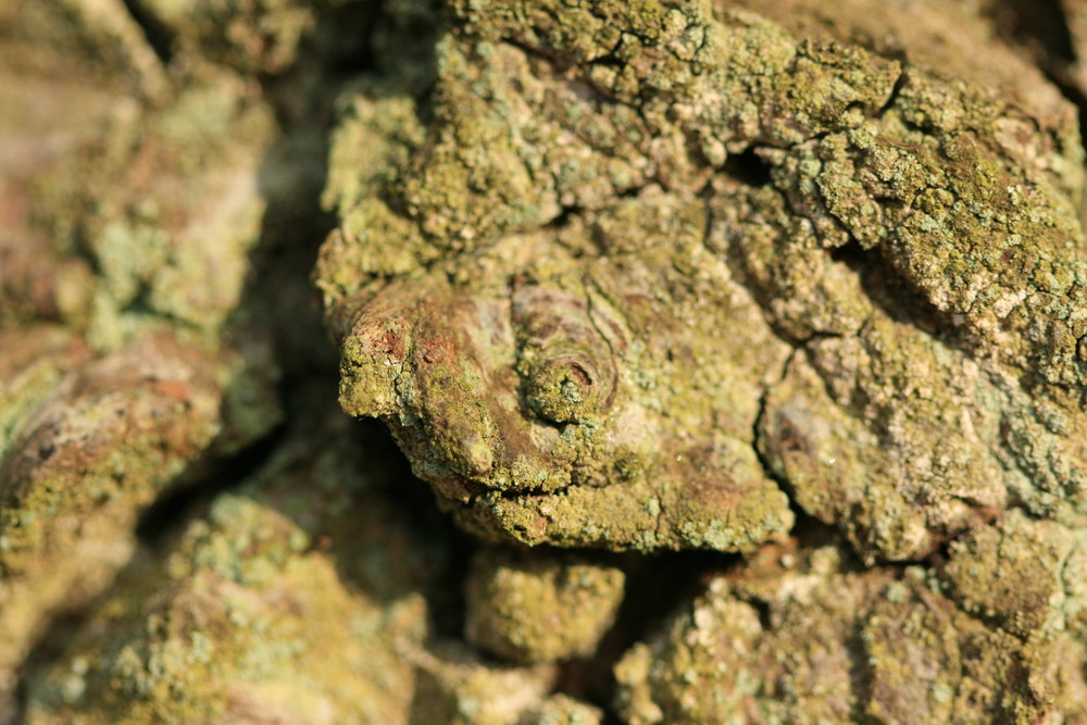 Ecorce ou tortue fossile ?
