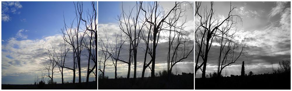 ecosistema en azul y negro