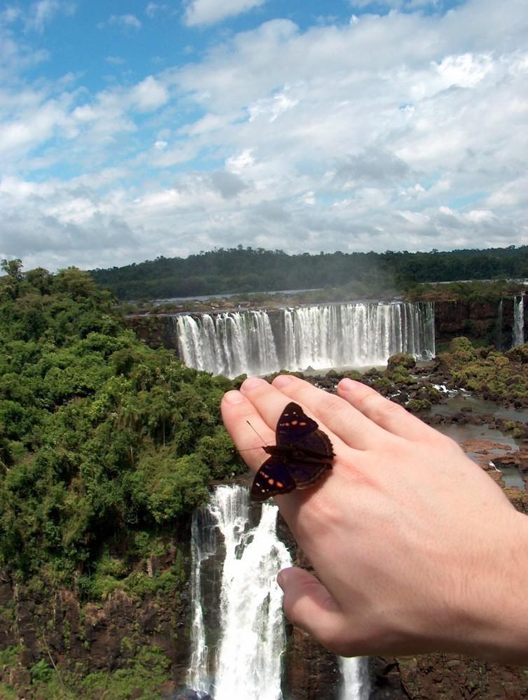 Ecosystème à Iguazu (Brésil)