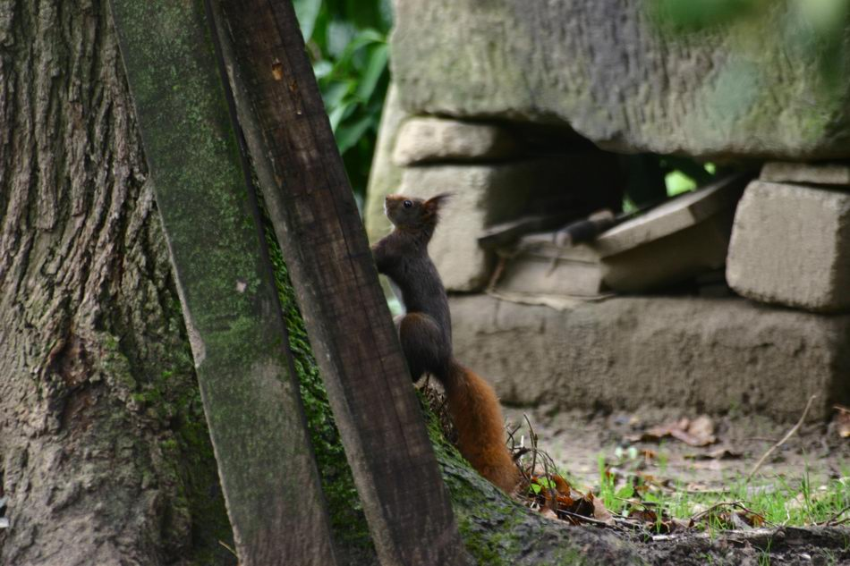 écureuil 2