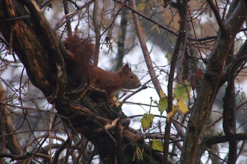 ecureuil !!!