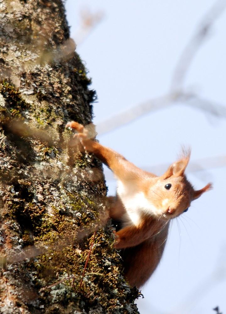 ecureuil agile 02