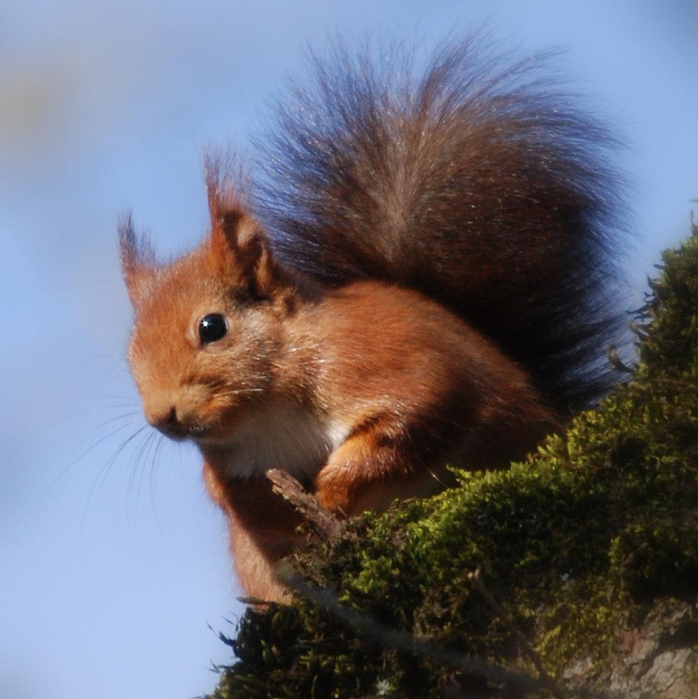 ecureuil agile 03