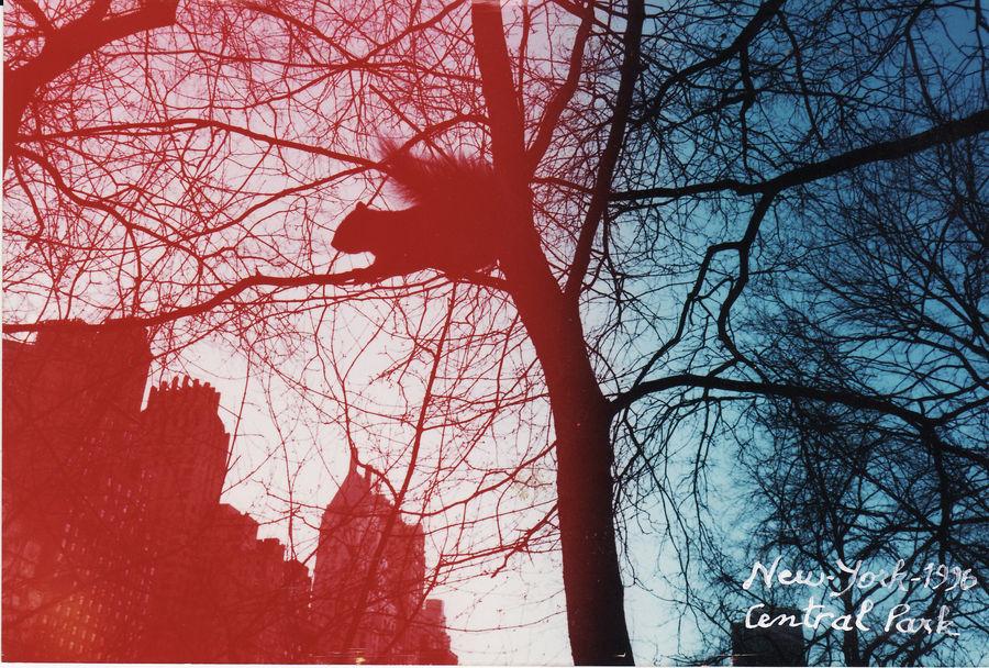 Ecureuil gris pris à central park