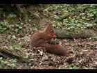écureuil6