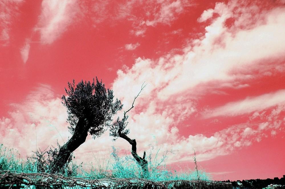 ...ed il cielo si fece rosso come il sangue