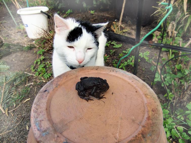 Eddie und die Erdkröten