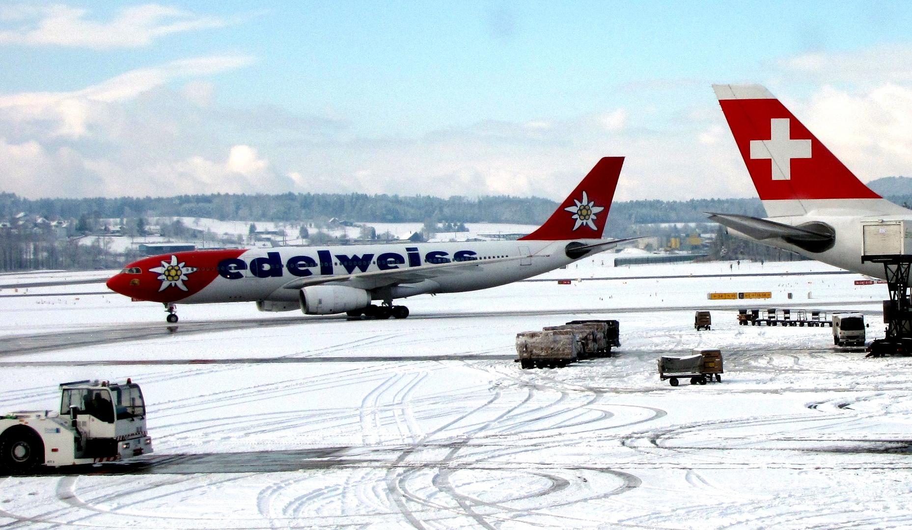 ..Edelweiss im Schnee ... . ... .