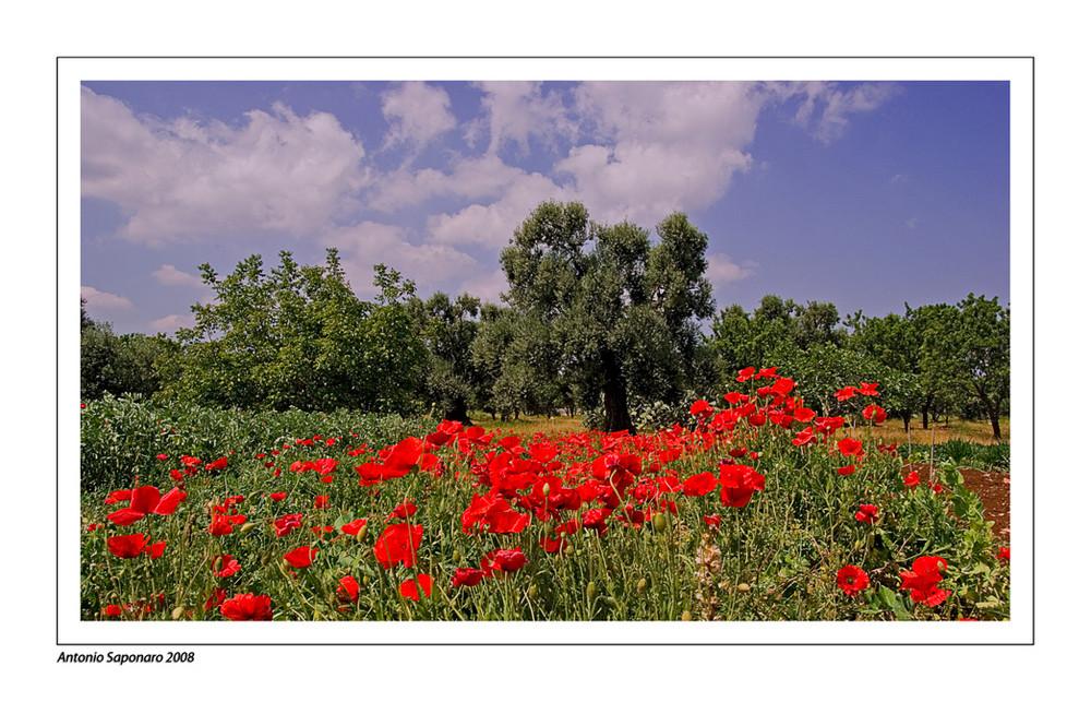 Eden di Puglia