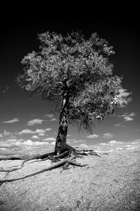 Eden Tree ?