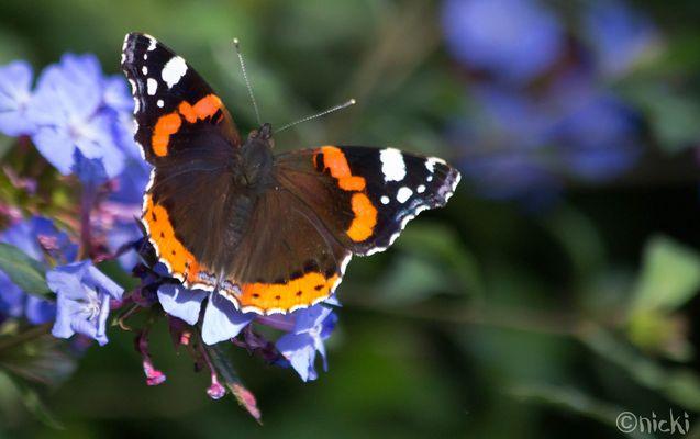 Een vlindertje