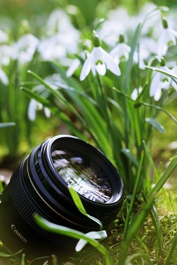 EF 85mm 1.8 - snowdrop