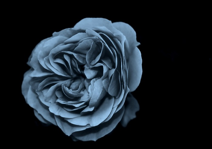 Effekt-Rose