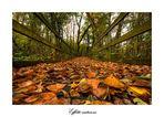 Effetto autunno