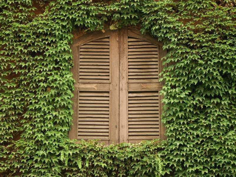 Effeuumranktes Fenster in Rom