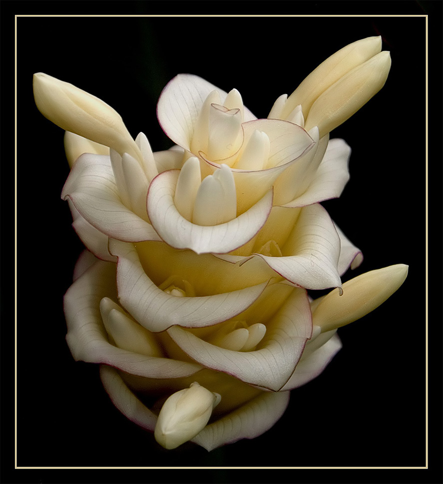 EGA - Blüten - 2