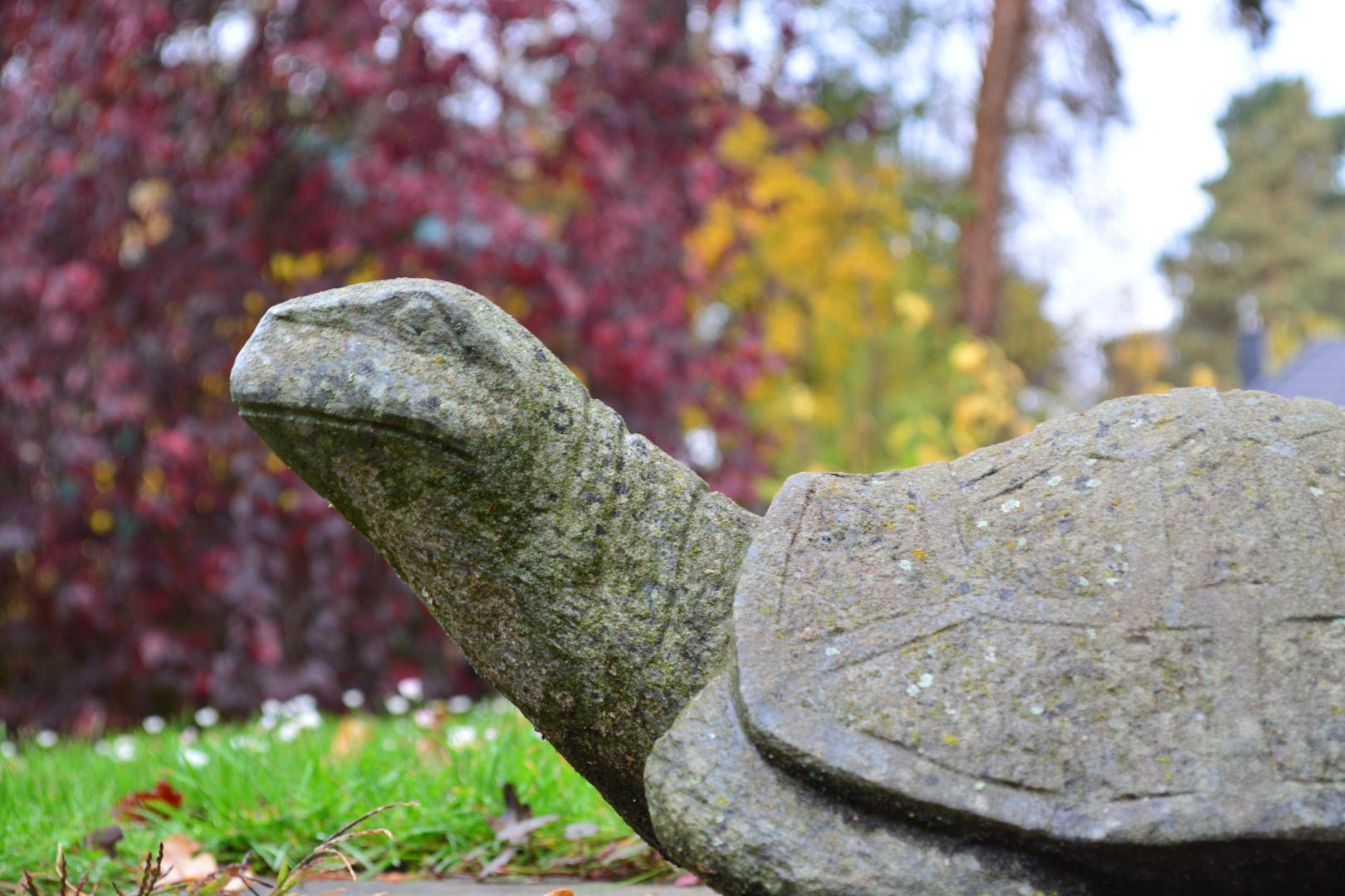 Egbert - unsere Steinschildkröte