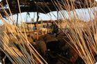 Egitto: pastori in ovile