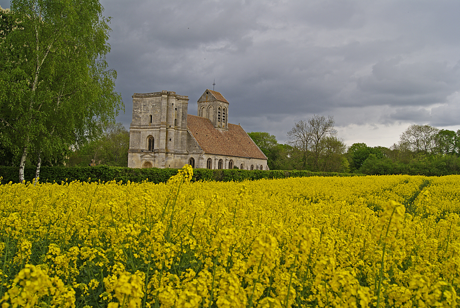 église et champs de colza, Nucourt, Véxin