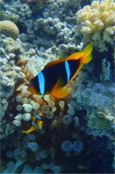 Egypt-Nemo und sein Vater ?!