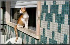 .Eh, c`è una gattina, ma troppo vecchia per me.