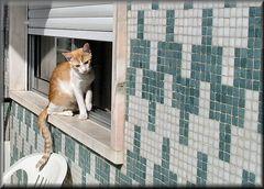 Ehe la giù c`è una bella gattina-))