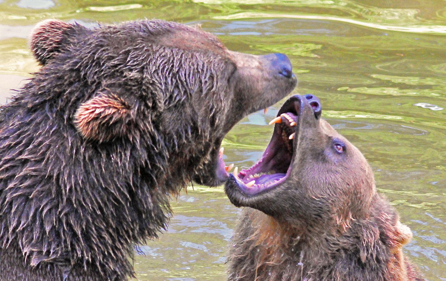 Ehekrach bei den Bärs...