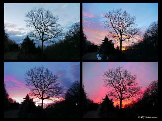 Eiche vorm Sonnenaufgang