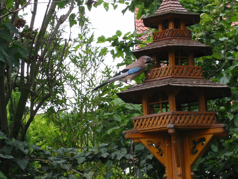 Eichelhäher am Vogelhaus